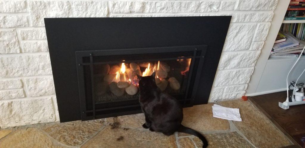 Friedmancat