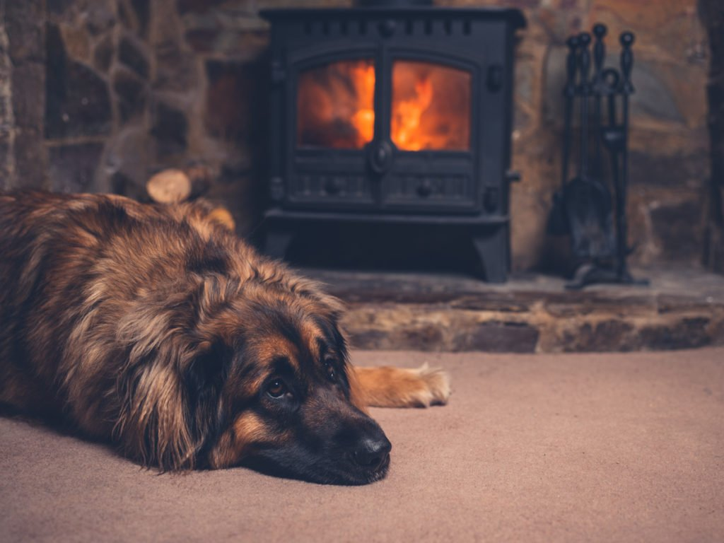 Dog relaxing by the fireplace in portland oregon