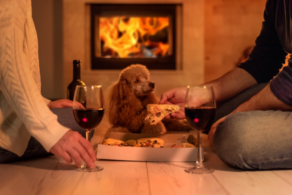 pet with portland oregon  fireplace background.