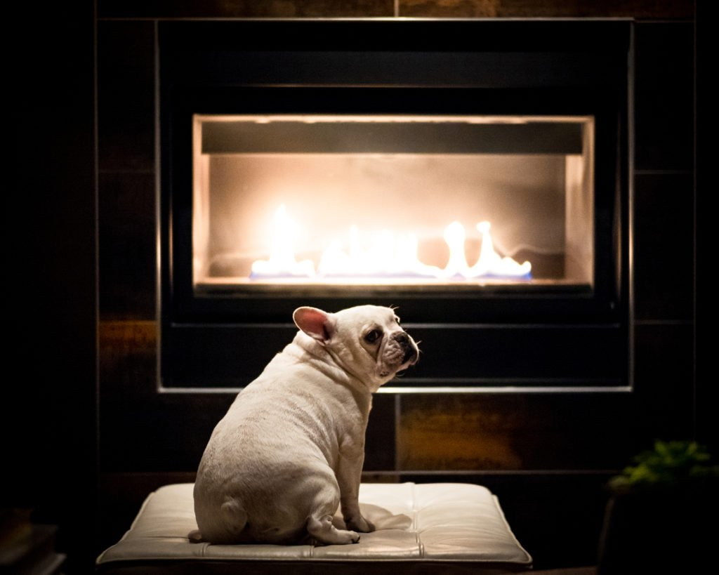 White Pug Dog by Fire