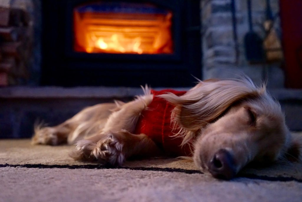 dachshund puppy naps by fireplace