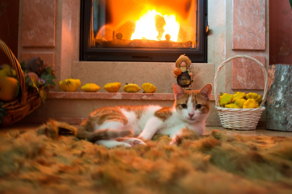 Red cat is basking by the fireplace in the cozy room.