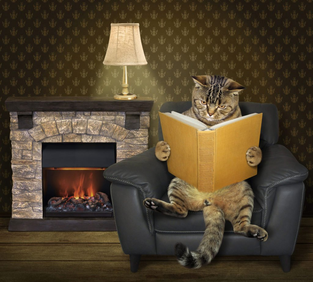 cat reading in front of portland Oregon fireplace installation