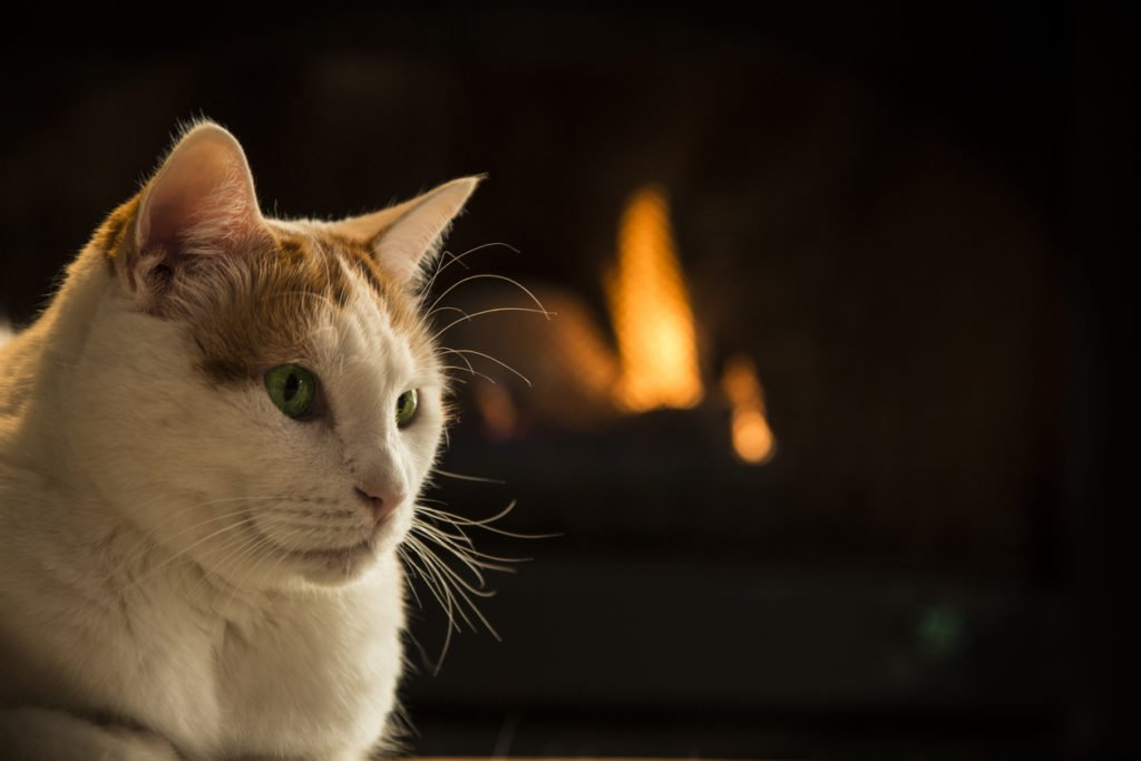 Cat sitting by portland installed fireplace